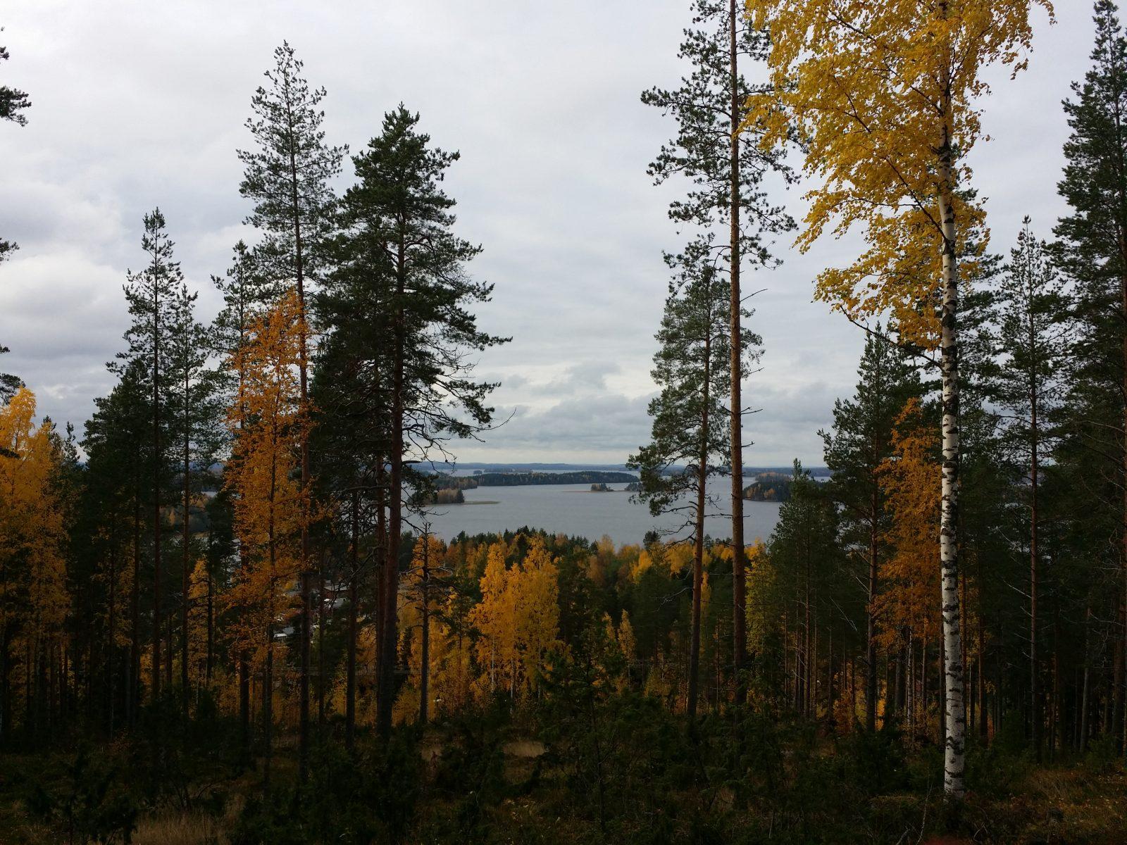 Kallavesi pilkistää Puijonsarven nuotiopaikalta kuvattuna puiden lomasta.
