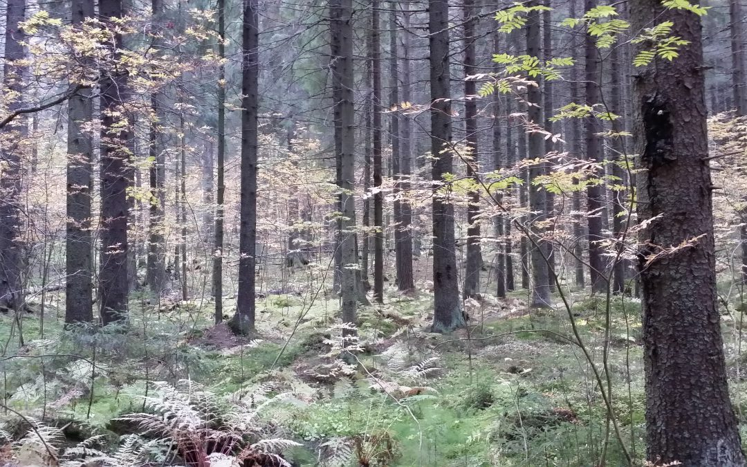 Metsäsuunnitelman uusiminen mahdollistaa Kuopiolle aiempaa kestävämmän metsien käytön